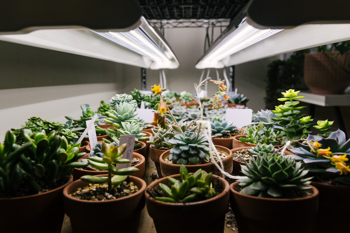 Winter Grow Light Setup For Succulents And Indoor Plants Living The Gray Life